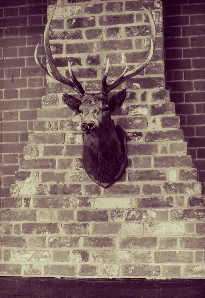 deer head on the unruly walls